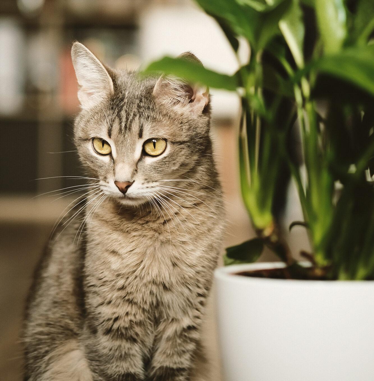 Oczyszczacz powietrza alergia na kota