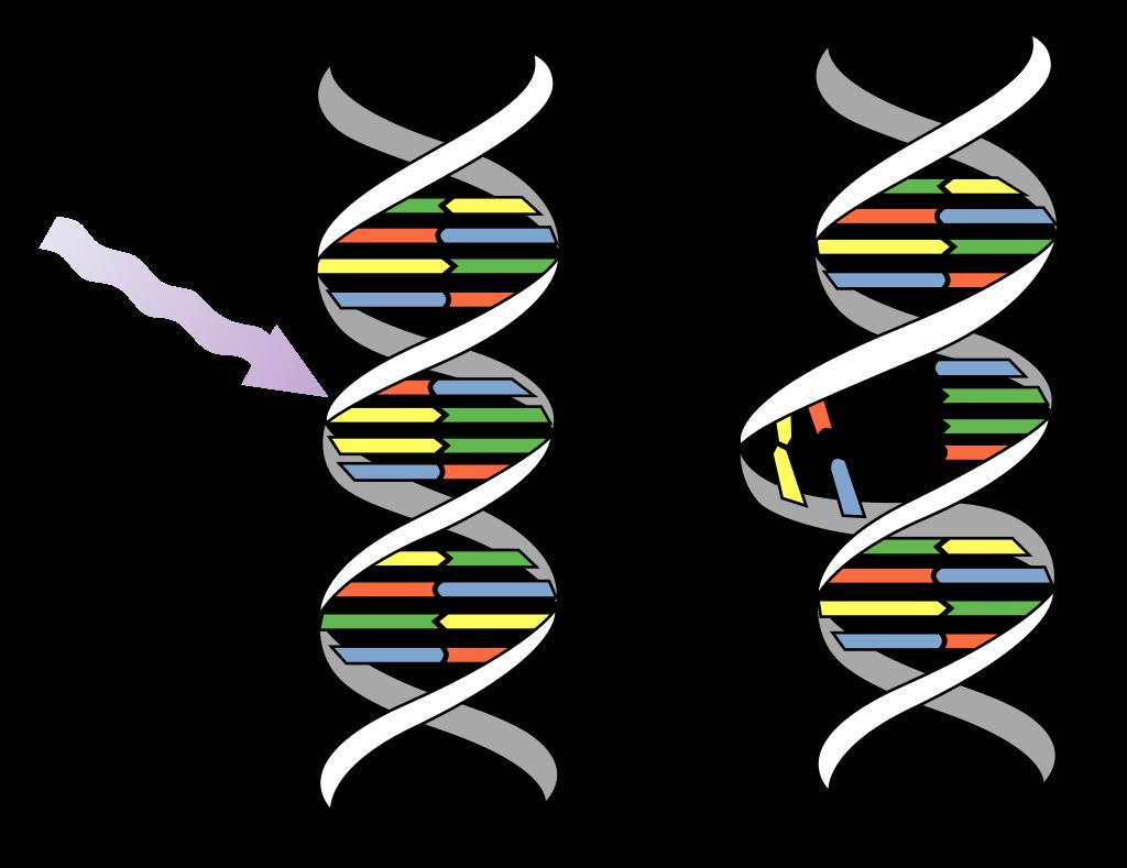 Zmiany w DNA pod wpływem światła UV